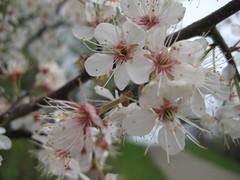 Emerging Spring - Purgatory Park