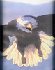 Eagle enhanced1