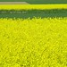 yellow and green by Keltia1