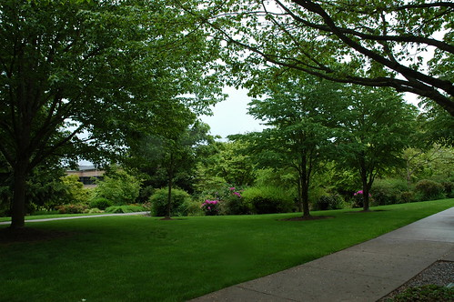 Meanwhile, somewhere on the Microsoft campus between the trees on the green lawn and sidewalk, typical cloudy day, Redmond, Washington, USA by Wonderlane
