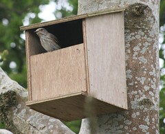wood, birdhouse,