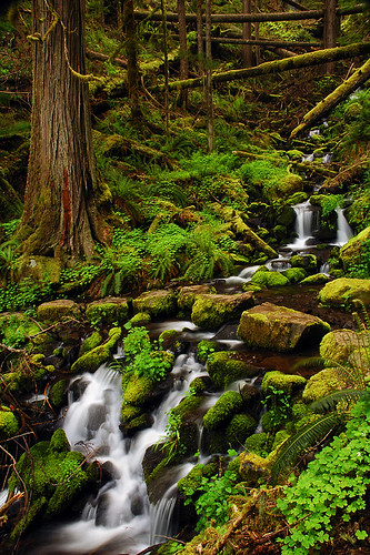 oregon pacificnorthwest creeks mounthoodnationalforest clackamasriver clackamasrivertrail pupcreekfalls