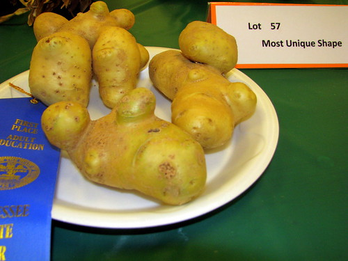 09 TN State Fair #113: Misfit Vegetables