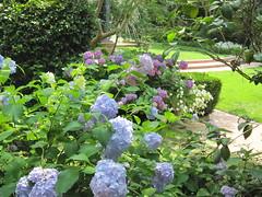 Elsong Gardens 7