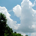 Small photo of Green Trees Blue Sky Big Clouds 16th Avenue
