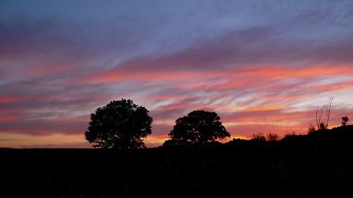 sunset sky tree clouds geotagged oak dehesa extremadura botija geo:lon=608634 geo:lat=39365758