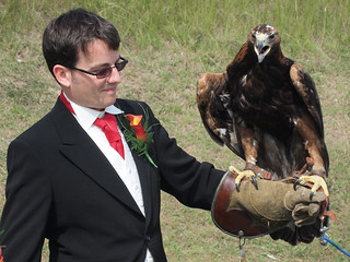 Simon & golden eagle