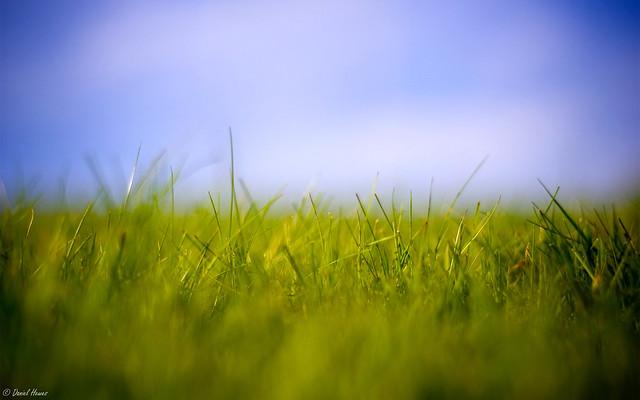 Grass Macro 1920x1200