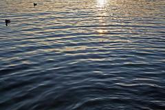 Lac Leman à Genève