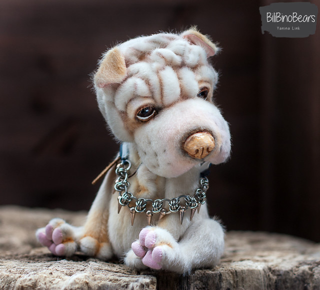 """Peanut"" - Chinese Shar-pei Puppy"