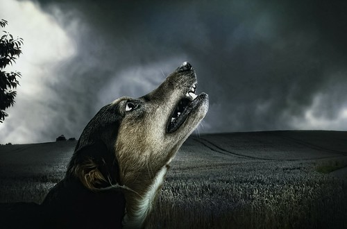 dog-183288_1920