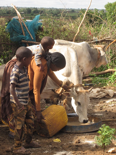 Sustainable WASH interventions