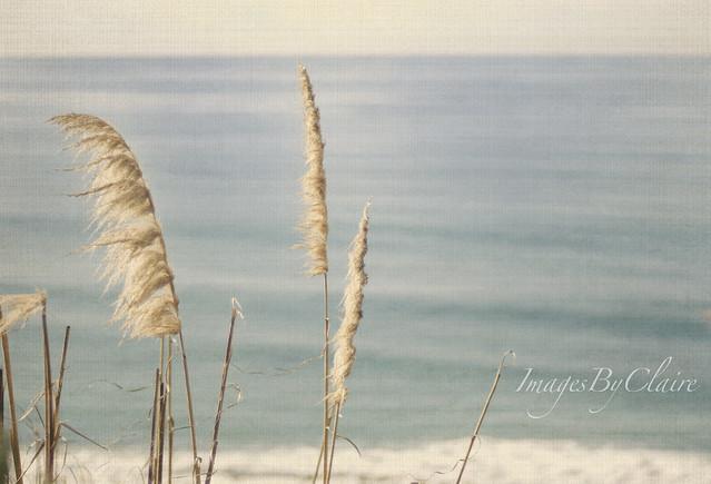 Ocean air {1/365}
