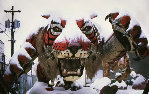 the extinct snow tiger