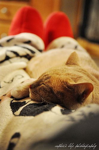 Nothing better than curling up with a furry loved one on a cold, snowy winter night.