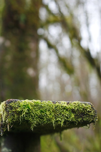 Mossy Bench End