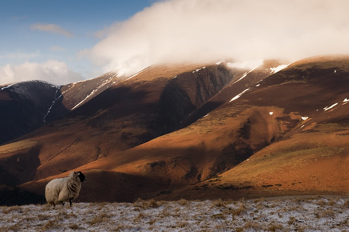 Sheep, shadows, and snow on Skiddaw