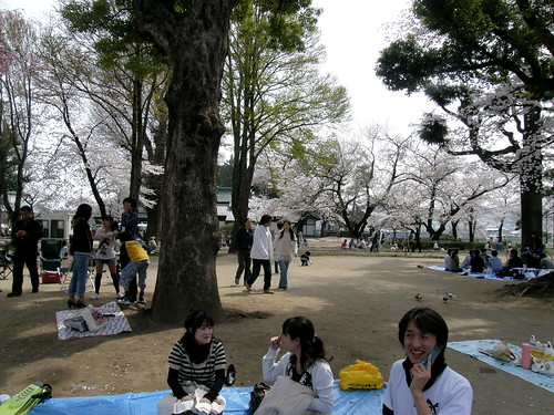 geotagged hanami takasaki 花見 群馬県 高崎 gummaprefecture 田中裕 geo:lat=36320191 geo:lon=13900253