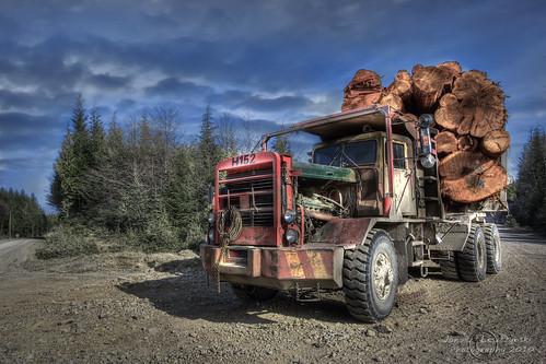 road trees monster truck geotagged islands logs logging cedar roads spruce hdr grahamisland queencharlotte haidagwaii janusz leszczynski portclements juskatla geo:lat=53603609 geo:lon=132300625 000558
