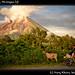 Volcan Ometepe, Nicaragua (3)
