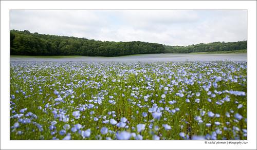 fleur field geotagged lin champ flax picardie picardy geo:lon=2495613 geo:lat=49366333 flaxblossom