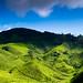 Tea Valley - Sungai Palas I by carsem00