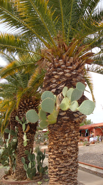 And a cactus in a palm tree....