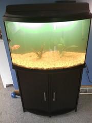 aquarium lighting, freshwater aquarium, aquarium,