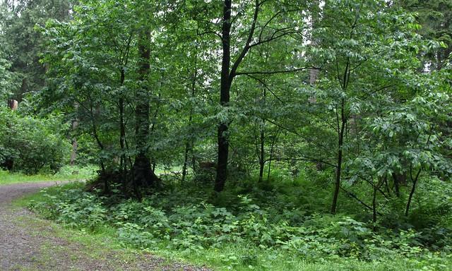Woods_4291