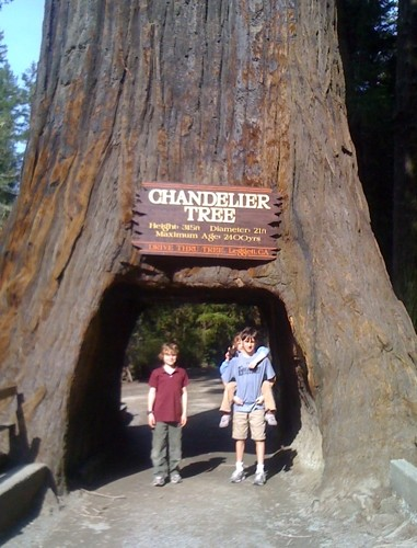 Buddy Bison and friends at Giant Sequoia Blazes