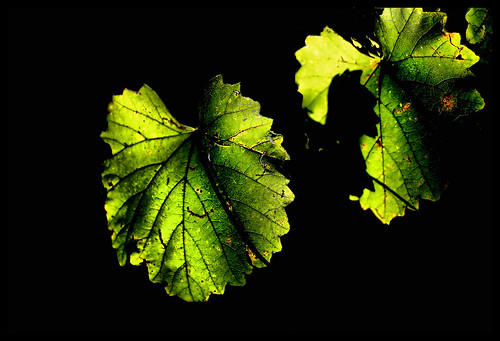 light sunlight leaf alabama wetumpka forttoulouse