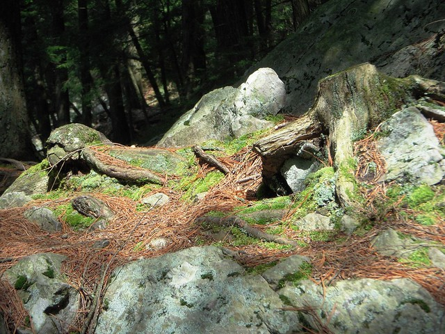 Tree Roots.2