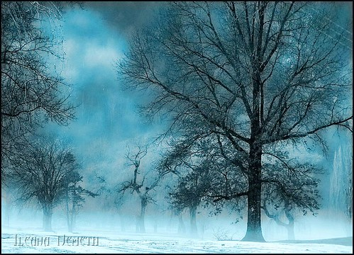 winter mist tree halloween fog landscape creepy spooky hdr arianwen mywinners agorathefineartgallery