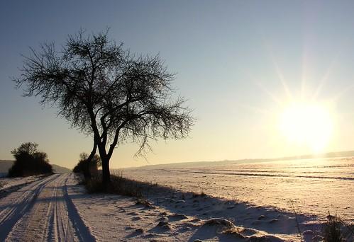 winter sun snow tree field germany village path thuringia trail sonne baretree sonnenstrahlen weg beforesunset schackendorf wegmitschnee nackterbaum