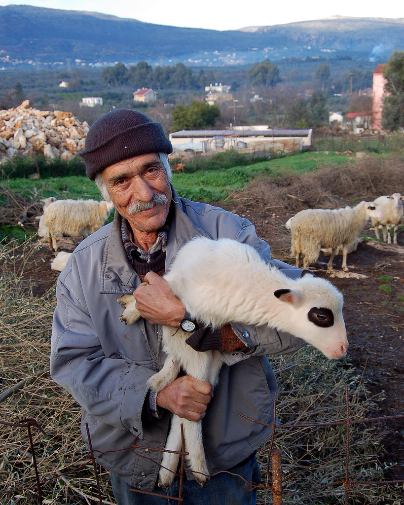 Pavlo's sheep on the Greek island of Crete