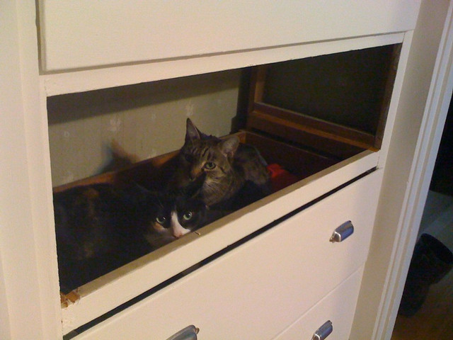 Cats in the drawer