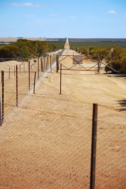 rabbit proof fence 455
