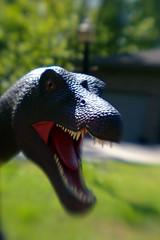 animal, velociraptor, tyrannosaurus, macro photography, green, fauna, close-up, dinosaur,