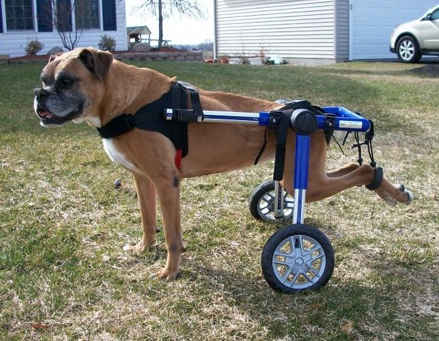 Image Result For Can Dogs Walk