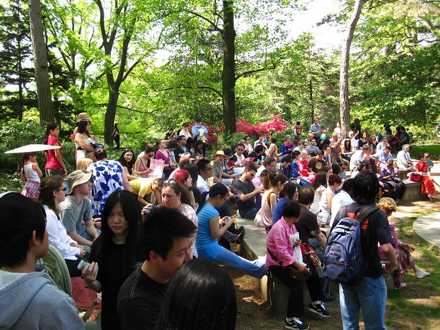 The hungry audience at the Sakura Matsuri 2010 Japaneses hot-pot cooking demonstration. Photo by Rebecca Bullene.