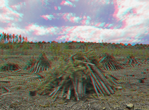 canon stereoscopic 3d anaglyph stereo sdm twincam redcyan sx110is