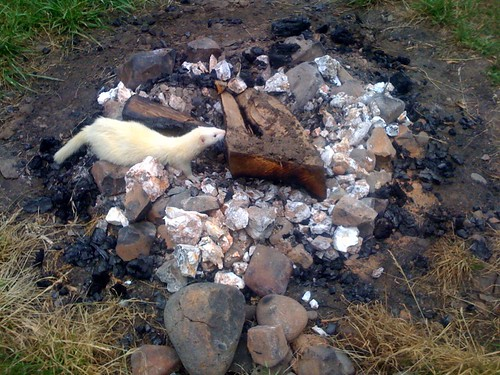 Ferret explores Fire Crater