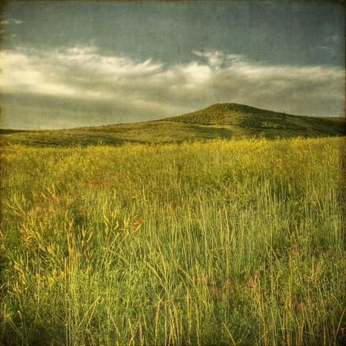 morning flowers sky field clouds square colorado glow meadow hills co wildflowers hdr textured lonetree latespring texturesquared t1i