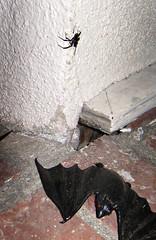 moth(0.0), leaf(0.0), wood(0.0), animal(1.0), wing(1.0), invertebrate(1.0), insect(1.0), fauna(1.0), bat(1.0),