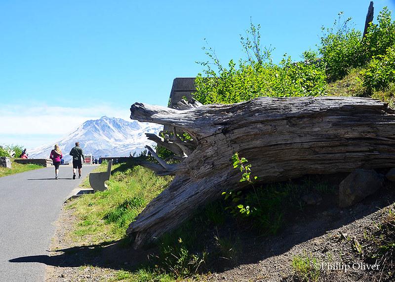 Mt. St. Helens (Washington)