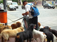 street dog(0.0), conformation show(0.0), animal(1.0), dog(1.0), pet(1.0), mammal(1.0), dog walking(1.0),
