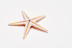 White starfish figurine with soft orange core
