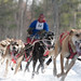 Kalkaska Dog Sled Races