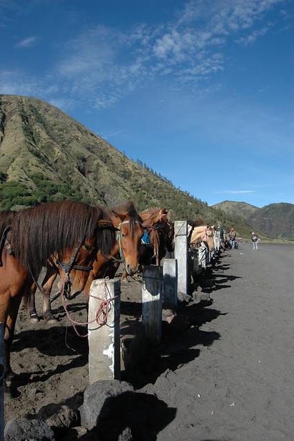 Horses at Bromo