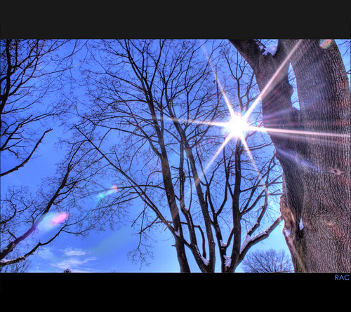 trees winter sky sun inspiration clouds canon eos star bright inspired bluesky flare treebark hdr sunflare 500d efs1855mmis canonrebelt1i